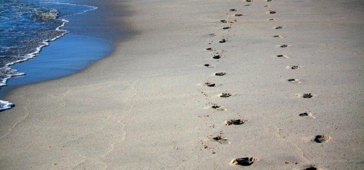 Neue Spuren im Sand